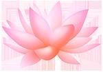 lotusMed